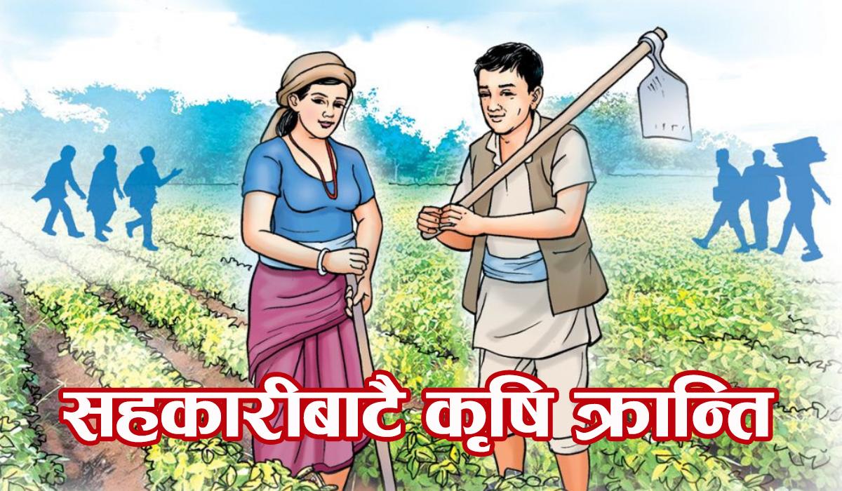 कृषिमा क्रान्ति : कसरी हुँदैछ सहकारी मोडलमा नमुना एकीकृत खेती ?