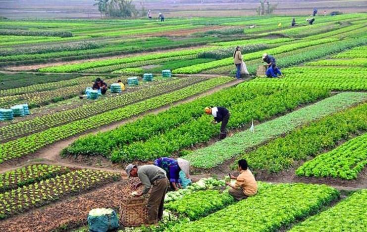 कृषकको उत्पादन सहकारीमार्फत बजारमा